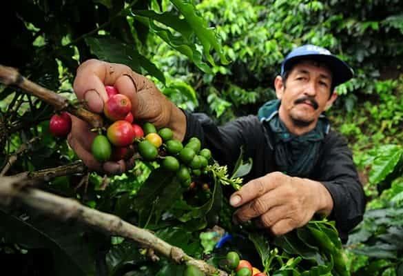Best Coffee Beans – Grown Where?